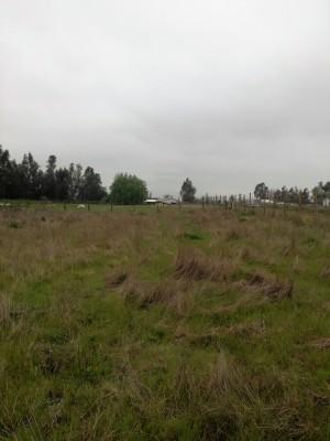 vendo parcela de agrado 5000 m2, buen terreno